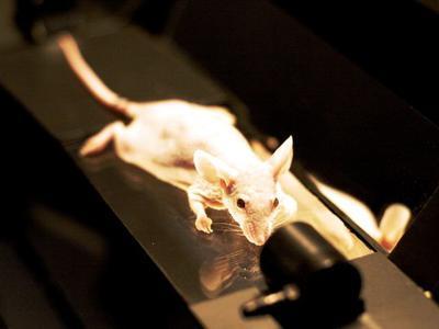 Animal testing essay conclusion