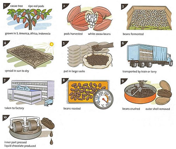 the process of making chocolate essay Ielts process - chocolate production you should spend about 20 minutes on this task the diagram explains the process for the making of chocolate could you please comment on the essay below thanks in advance many countries aim to improve their living standard by economic.